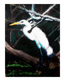 120807 Egret Honey Island Swamp Louisiana Giclee Print by Garland Oldham