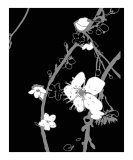 Black n White Cherry Blossom Photographic Print by Estela Lugo