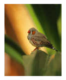 Little Bird Photographic Print by Jeanne Apelseth