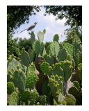 A Prickly Perch Photographic Print by Lucyna A M Green