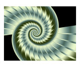 Nautilus 3 Photographic Print by Vicky Brago-Mitchell