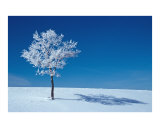 Frosted Tree Photographic Print by Jeanne Apelseth