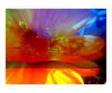 High Drama Sunset Photographic Print by Randi Bailey