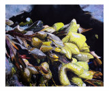 Sea Plants at Owls Head State Park Giclee Print by Carl Rand