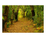 Automne en Foret Photographic Print by Patrick Morand