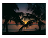 Grand Cayman Sunset Photographic Print by Anne Flinn Powell