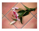 Lily Stem On Tile Photographic Print by Lucyna A M Green