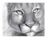 Cougar Pride Giclee Print by Carla Kurt