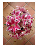 Lilies Gathered On Tile Photographic Print by Lucyna A M Green