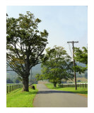 Country Road Photographic Print by  Dw Labs