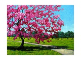 Pink Blossoms on a Summer Day Giclee Print by Patty Baker