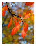Fall Foliage 2 Photographic Print by Kim Straus