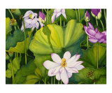 Luscious Lotus Giclee Print by Jolly Kornicks