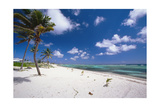 Palm Trees in the Breeze Cayman Islands Photographic Print by George Oze