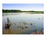 Lilypads Waterscape Photographic Print by Michelle Calkins