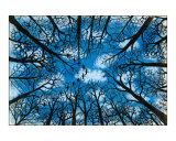 Winter Woods Giclee Print by John Francis Peters
