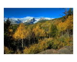 Aspens under Hallet Photographic Print by Rich Ernst