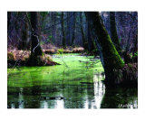 Calmness Photographic Print by Lothar Boris Piltz