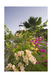 Lighthouse and Bougainvillea Photographic Print by George Oze