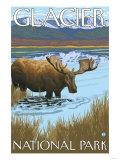 Moose Drinking at Lake, Glacier National Park, Montana Prints