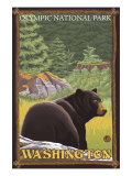 Black Bear in Forest, Olympic National Park, Washington Prints
