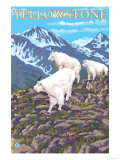 Mountain Goats Scene, Yellowstone National Park Prints