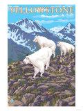 Mountain Goats Scene, Yellowstone National Park Prints