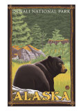 Black Bear in Forest, Denali National Park, Alaska Prints