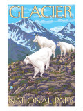 Mountain Goats Scene, Glacier National Park, Montana Prints