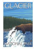 Bear Fishing in River, Glacier National Park, Montana Prints
