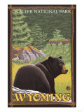 Black Bear in Forest, Yellowstone National Park Prints