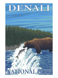 Bear Fishing in River, Denali National Park, Alaska Prints