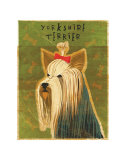 Yorkshire Terrier Posters by John Golden