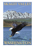 Bald Eagle Diving, Skagit Valley, Washington Art by  Lantern Press