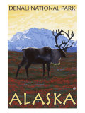 Caribou Scene, Denali National Park, Alaska Prints