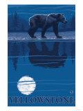Bear in Moonlight, Yellowstone National Park Prints