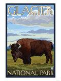 Bison Scene, Glacier National Park, Montana Prints