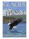 Bald Eagle Diving, Glacier National Park, Montana Prints