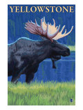 Moose at Night, Yellowstone National Park Prints