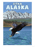 Bald Eagle Diving, Sitka, Alaska Posters