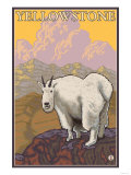 Mountain Goat, Yellowstone National Park Print by  Lantern Press