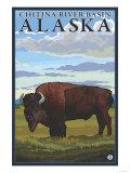 Bison Scene, Chitina River Basin, Alaska Poster