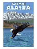 Bald Eagle Diving, Katmai, Alaska Poster