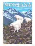 Mountain Goats Scene, Montana Poster by  Lantern Press