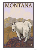 Mountain Goat, Montana Posters by  Lantern Press