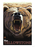 Bear Roaring, West Yellowstone, Montana Posters