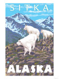 Mountain Goats Scene, Sitka, Alaska Poster