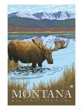 Moose Drinking at Lake, Montana Posters by  Lantern Press