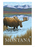 Moose Drinking at Lake, Montana Posters