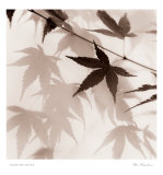 Japanese Maple Leaves II Print by Alan Blaustein